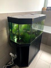 Aquarium zu verschenken