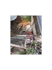 3 Griechische Landschildkröten