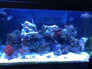 Meerwasser Aquarium Red Sea 250
