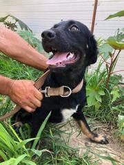 Conde sucht sein Glück Tierschutz