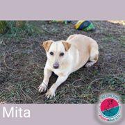 Mita - mit den großen Kulleraugen