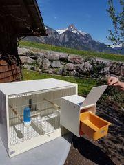 Zucht- und Ausstellungsboxen für Wellensittiche