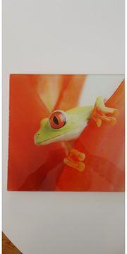 Glasbild Frosch