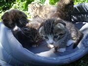Wunderschöne Kätzchen von einzigartige Paar