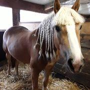 Suche Pferdestall mit Koppel