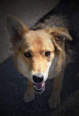 ANEZKA - ganz lieb auch noch: Kleinanzeigen aus Rabenau - Rubrik Hunde