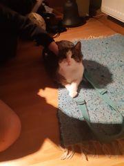 Katzen 7 monate zu verschenken