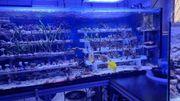 Anfängerkorallen Sps Korallen Lps Korallenableger