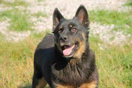 HENRICH - der Kuschelprinz liebt Kinder: Kleinanzeigen aus Rabenau - Rubrik Hunde