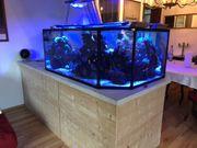 Meerwasseraquarium Aquarium Salzwasser Korallen Nemo