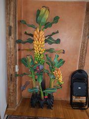 Bananenbaum Holz balinesische Deko
