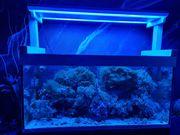 EHEIM 400 Meerwasseraquarium komplett