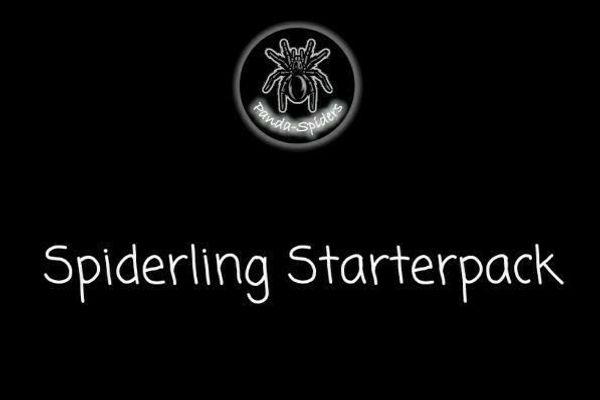 Spiderling Starterpack Aufzucht Kit Vogelspinnen