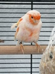 7 Vögel Auf einem Streich