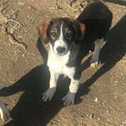 Tierschutz Mara sucht Zuhause zu