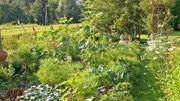 Suchen Garten-Freizeitgrundstück in Niedernberg und