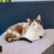 DULCINEA BARBAROSSA - Traumkatzen suchen Traumzuhause