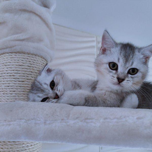 Süße Kitten Abgabebereit 2 noch