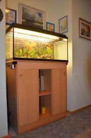Aquariumkombination gute Zustand EUR 80 -