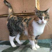 Ruhige Katze Peaches sucht Familienanschluss