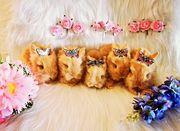 Teddyzwerge Zwergkaninchen Löwenköpfchen Hasen Kaninchen