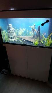 Aquarium 125 l mit Unterschrank