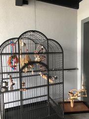 Papageienkäfig mit Zubehör
