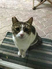 verschmuste Katze Piccolina sucht Zuhause