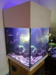 Meerwasser Aquarium 60x60x60