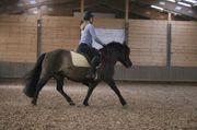 Reitbeteiligung Reiterin sucht Pferd