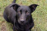 BONITO - Ein lieber Junghund auf