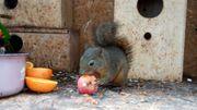 Hörnchen Streifenhörnchen Eichhörnchen