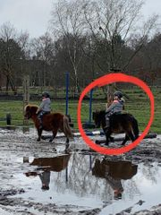 verkaufe pony wallach