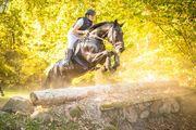 Reitbeteiligung Pferd sucht Reiter in