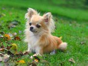 suche einen Hund zum verschenken