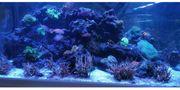 Meerwasser Aquarium-Auflösung Hobbyaufgabe