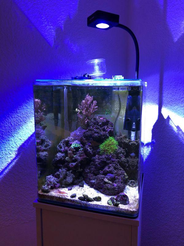 Meerwasser Nano Aquarium 30l