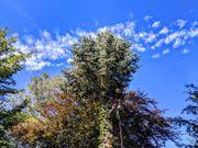Baumservice mit Seilklettertechnik zur Totholzentfernung