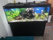 Aquarium komplet ales