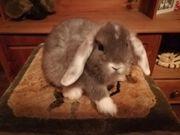 Tolle NHD Kaninchen Babys ab