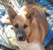 PACO - wunderbares Hundekind sucht ein