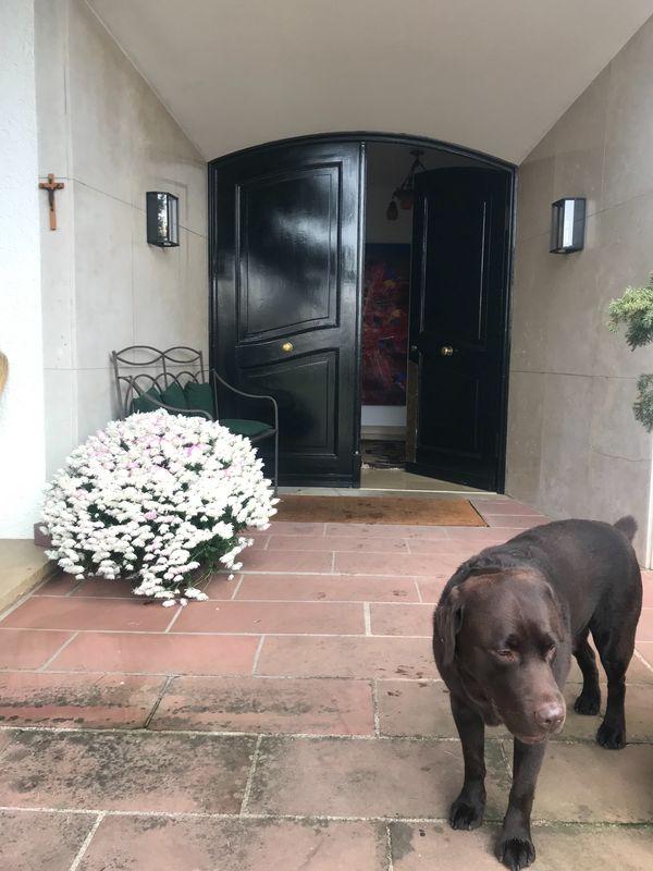 Haushälterin mit Hundebetreuung für anspruchsvolle