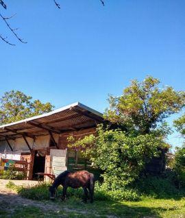 Pferde - Biete superschönen Platz für alte