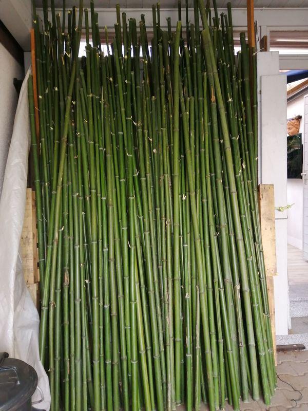 Bambus grün 210 Stück