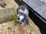 Zwei schöne Kaninchen