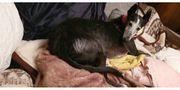 Herzhund sucht passendes Körbchen