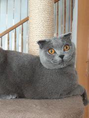 BKH Blue Katze