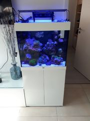 Neu Meerwasser Aquarium Lido 120