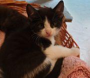 4 süße Kätzchen suchen neues