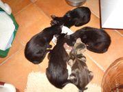 Aufgeweckte zutrauliche Katzenkinder vom Tierschutz